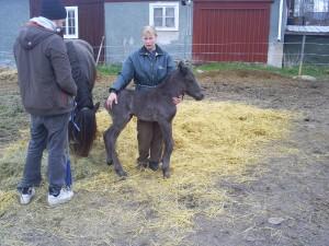 Järvsö Lasse nyfödd