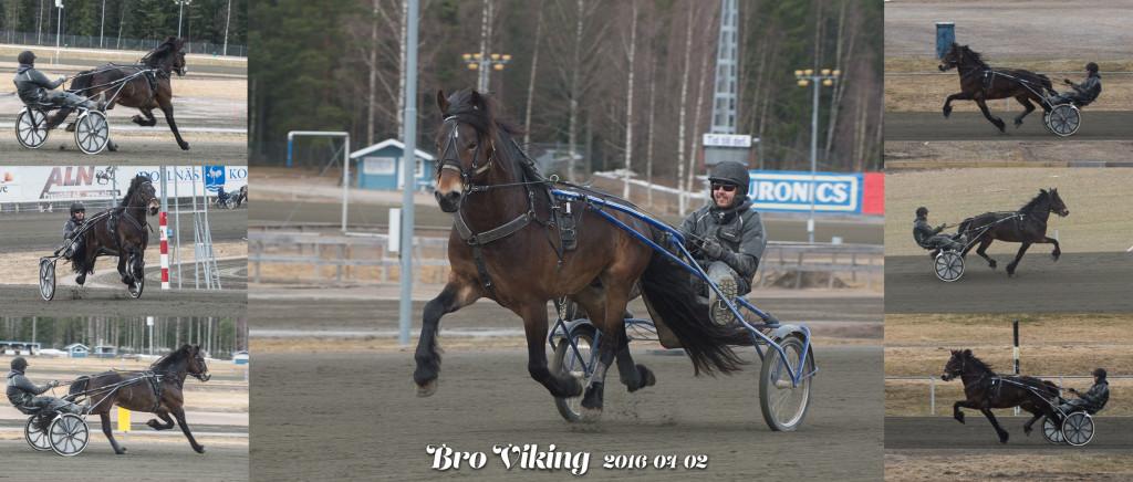 broviking_FF42438