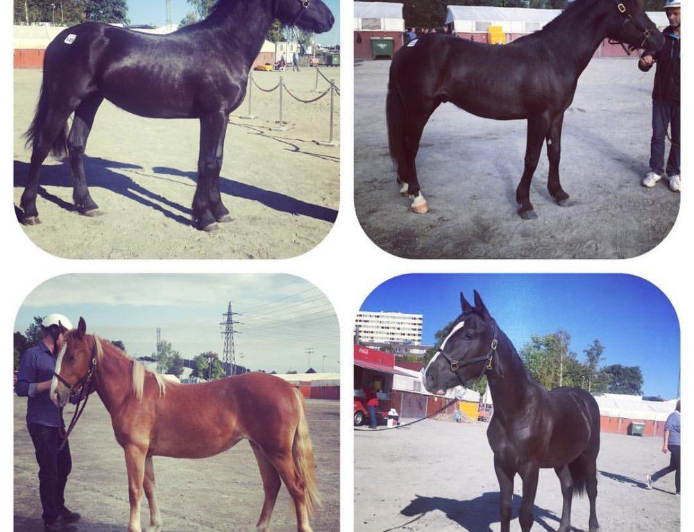 Vilka hästar vi köpte!!!