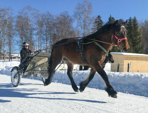 Fosshaug Frasse (andelshäst)